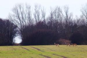 16-02-06 Niehagen 03